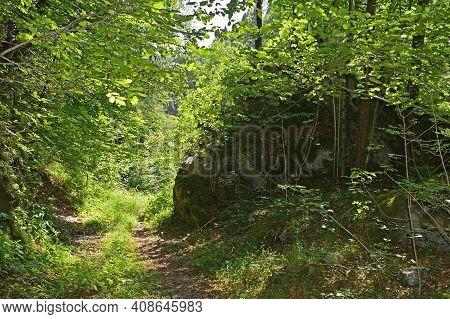 The Woodland Landscape Near Cjampiui In Udine Province, Friuli-venezia Giulia, North East Italy