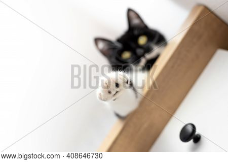 A Playful Cat With Yellow Eyes Is Lying On A Dresser With His Paw Hanging Down.