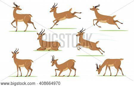 Cartoon Gazelle Set. African Antelope Walking, Eating, Running, Jumping, Resting On Lawn In Differen