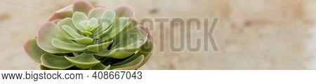Succulent Plant On Pot Isolated On Blurred Beige Background. Pastel Green With Red Tips Echeveria Su