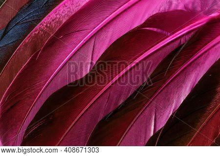 Coloured Bird Feathers