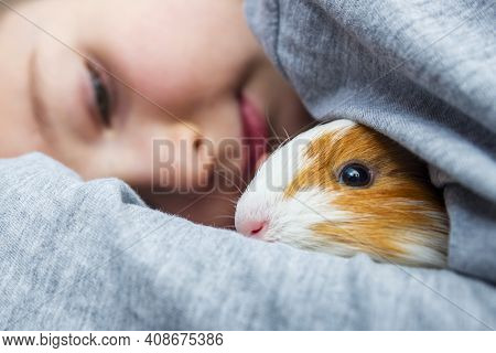 A Boy With His Guinea Pig. A Boy Hugs A Guinea Pig. A Child Plays With The Pet At Home. Pet Care.