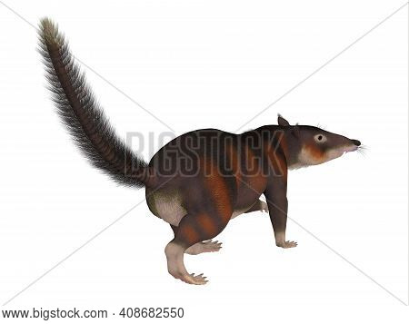 Cronopio Mammal Tail 3d Illustration - Cronopio Is An Extinct Carnivorous Mammal That Lived In South