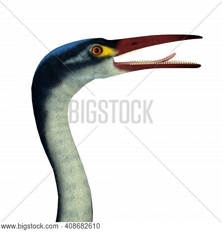Hesperornis Bird Head 3d Illustration - Hesperornis Is An Extinct Cormorant-like Bird That Lived In