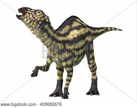 Maiasaura Juvenile Dinosaur 3d Illustration - Maiasaura Was A Herbivorous Duck-billed Hadrosaur Dino