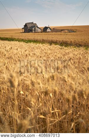 Rustic Abandoned Farmstead. Old Abandoned Farm Buildings On Agricultural Land.
