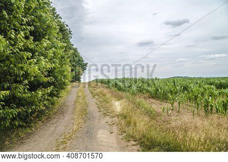 Tranquil Lane Beside Cornfield In Hessen Germany