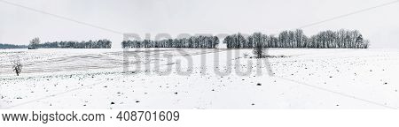 Lowlight From Panorama Of Row Of Trees In The Snow