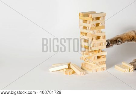 Wooden Board Game On A White Background. The Cat Plays A Game Of Chance In Which Balance And Composu