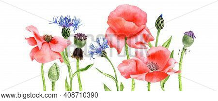 Watercolor Drawing Red Poppy Flowers And Blue Cornflowers, Floral Background, Hand Drawn Illustratio