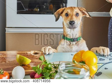 The Dog Looks With Interest At The Table With Food Prepared For A Virtual Online Master Class, Prepa