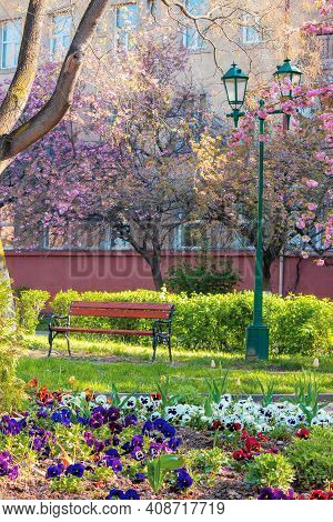Urban Scenery With Cherry Blossom. Bench And Lantern Under The Trees. Masaryk Park In Uzhgorod. Beau