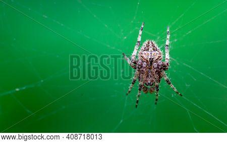 Closeup On A Cross Spider, Also Called European Garden Spider, Diadem Spider Or Pumpkin Spider
