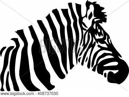 Zebra Vector Illustration Isolated On Background Zebra Vector, Zoo