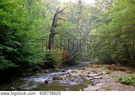 Tree On The Bank Of A Stream In Carpathians