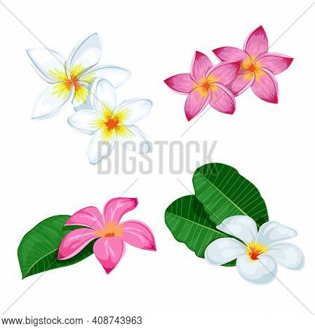 Plumeria Flowers Set. Pink And White Blooming Floral With Leaves And In Group. Tropical Flowers Coll