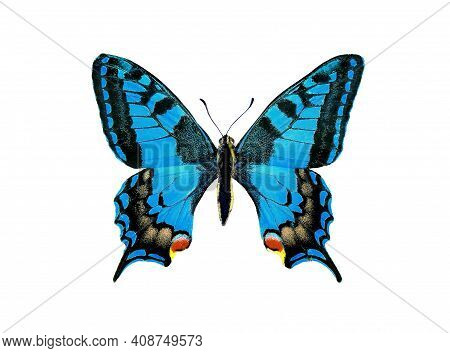 Bright Colorful Blue Butterfly Isolated On White. Blue Swallowtail Butterfly