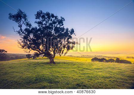 Beautiful South Australian sunrise over rural field