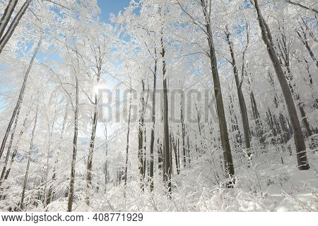 Winter woods forest sunrise morning sun Nature background Nature background tree Nature snow Nature background landscape Nature background sunny Nature sunshine xmas Nature background trees Nature background Nature background christmas Nature background.