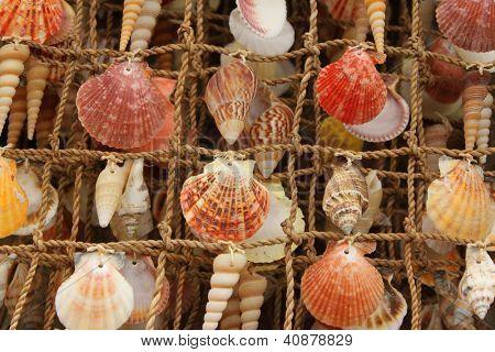 Sea shells on display