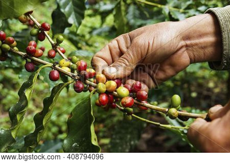 Coffee Cup. Hot And Fresh Morning Coffee. Coffee Beans Background. Brown Roasted Coffee Beans. Close