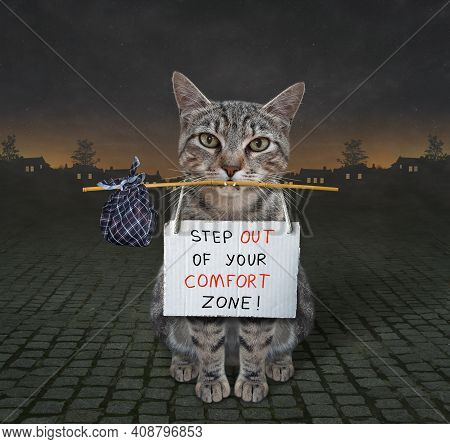 At Night On The Street A Gray Cat With A Bag Holds A Poster That Says Step Out Of Your Comfort Zone.