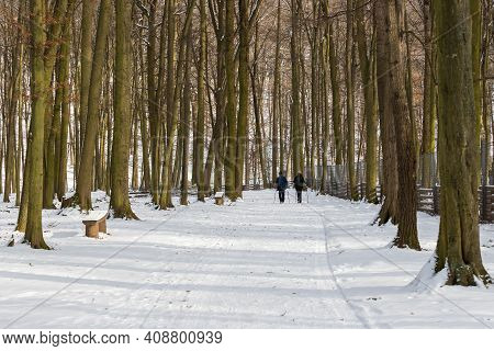 Snowy Forest Road. There Are Wooden Benches Around The Road. In The Distance On The Road Are Two Sil