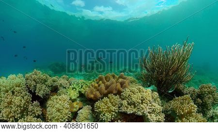 Reef Coral Scene. Colourful Underwater Seascape. Beautiful Soft Coral. Sea Coral Reef. Philippines.