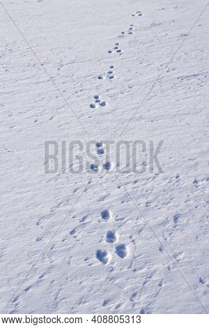 Animal Tracks In The Snow In A Minmalistic Image