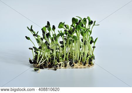 Radish Seeds And Microgreen, Packs Of Linen Mats On White Background. Natural Base For Growing Plant
