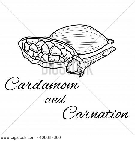 Cardamom And Carnation. Sketch.coloring. Illustration Isolated On White Background.zen-tangle Style.