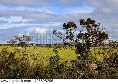 Madron (england), Uk - August 16, 2015: Typical Cornwall Landscape, Cornwall, England, United Kingdo