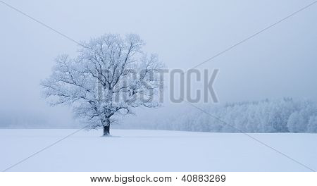 Lonely Tree In Snowdrift