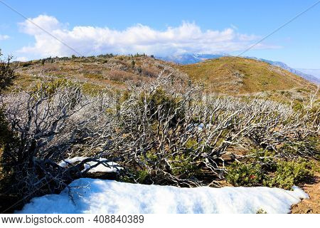Alpine Meadow Covered With Snow Besides A Chaparral Woodland On Arid Badlands Taken At A Windswept P