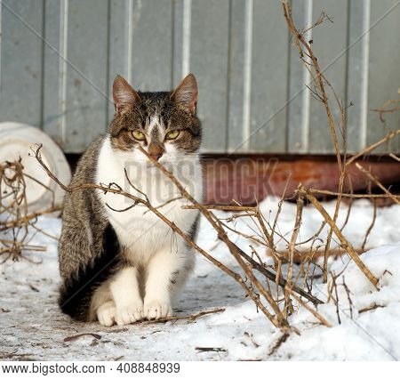 Cautious Stray Cat Sitting In The Snow On A Cold Winter Day.