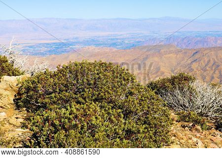 Chaparral Plants On A Windswept Mountain Ridge Overlooking The Colorado Desert Including The Town Of