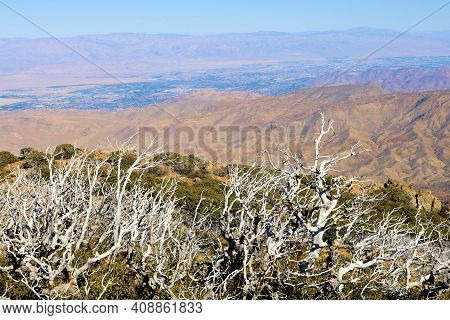 Burnt Chaparral Plants Caused From A Past Wildfire On An Alpine Plateau Overlooking The Colorado Des