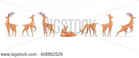 Cartoon Deer Set. Male Horny, Female, Baby Fawn Spotted Reindeers In Different Poses Isolated On Whi