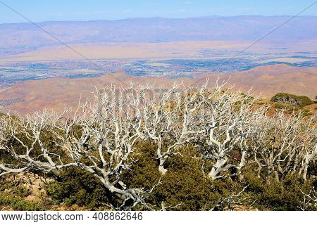 Burnt Chaparral Plants Caused From A Past Wildfire On A Mountain Plateau Overlooking The Colorado De