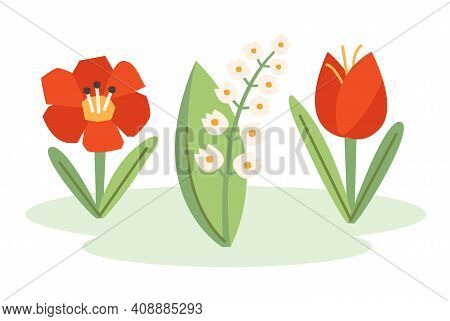 Poppy Flower, Snowdrop, Tulip, Nature Illustration, Banner, Card Design. Spring.