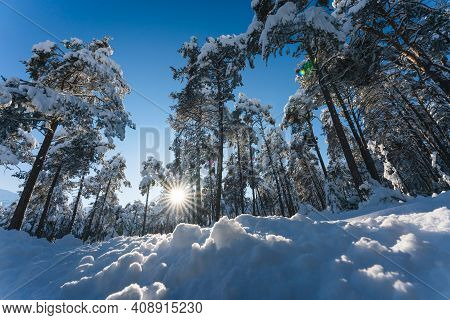 Snow Covered Evergreen Trees In Alpine Forest In Sunlit Winter Landscape With Sun Star, Wildermiemin