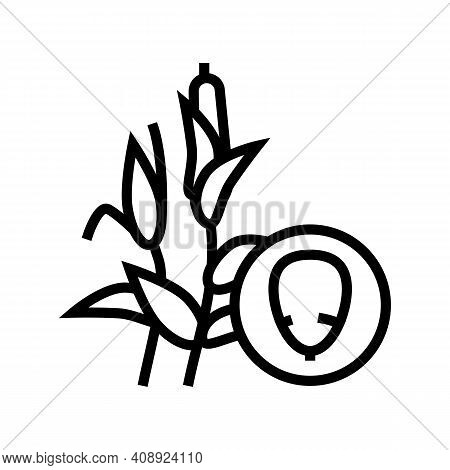 Corn Groat Line Icon Vector. Corn Groat Sign. Isolated Contour Symbol Black Illustration