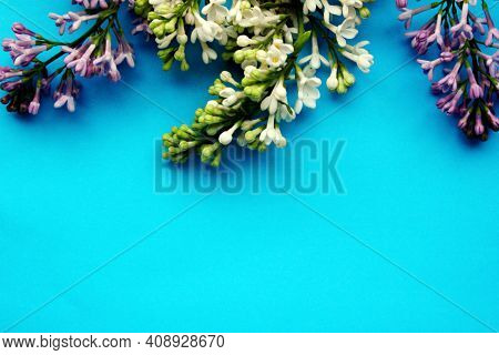 Lilac. A Branch Of Purple And White Lilac On A Blue Background. Lilac Blooming View From Above. Spri
