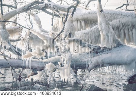Icicles On A Frozen Tree By The Seashore On A Cold Day In The Winter