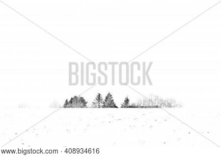 Trees Covered With Snow In The Winter On A Field The Day After Snowfall In A Countryside Landscape
