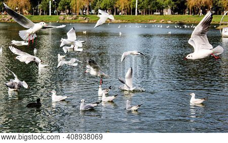 White Birds On The Blue Lake On Sunny Spring D Ay. High Quality Photo