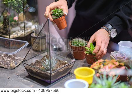 Female Holds Glass Florarium Vase With Succulent Plants Small Garden With Miniature Plants. Home Ind