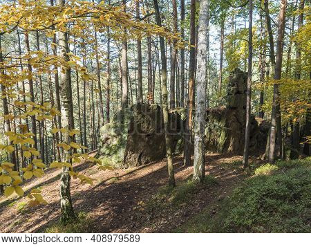 Colorful Autumn Deciduous Beech Tree And Pine Tree Forest With Sandstone Rocks At Sunny Day