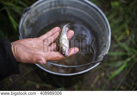 Ide Leuciscus Idus With A Fishhook And A Bait In A Mouth Is On A Blurred Background. The Caught Fish