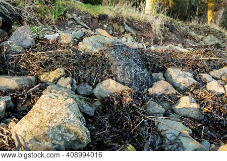 Excess Asphalt Dumped On Rocks On A Beach By The Side Of The Road